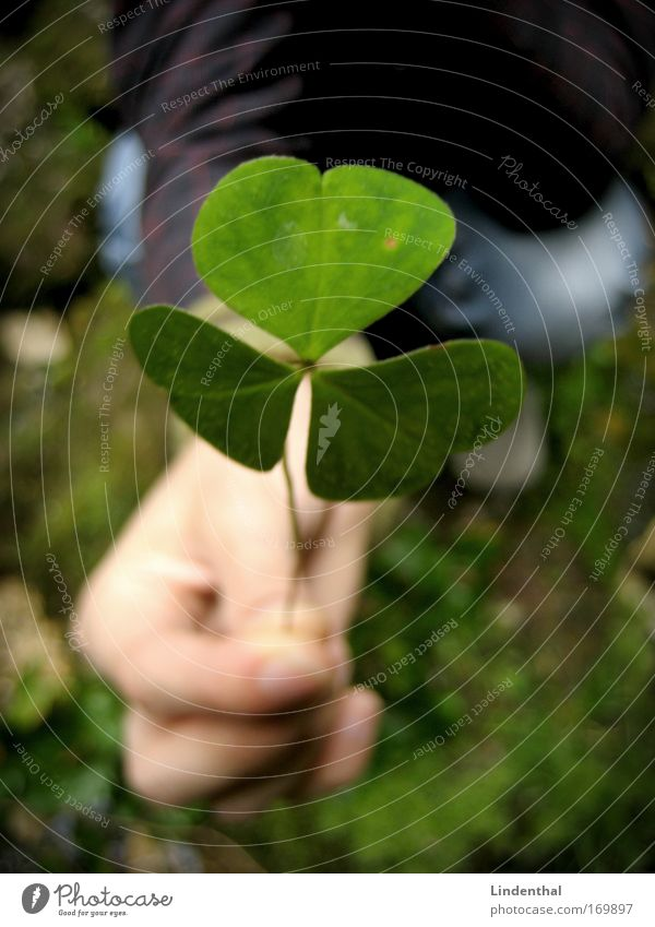 A cloverleaf for you Colour photo Exterior shot Copy Space bottom Day Downward Human being Hand 1 Plant Leaf Foliage plant Clover Cloverleaf Emotions Love