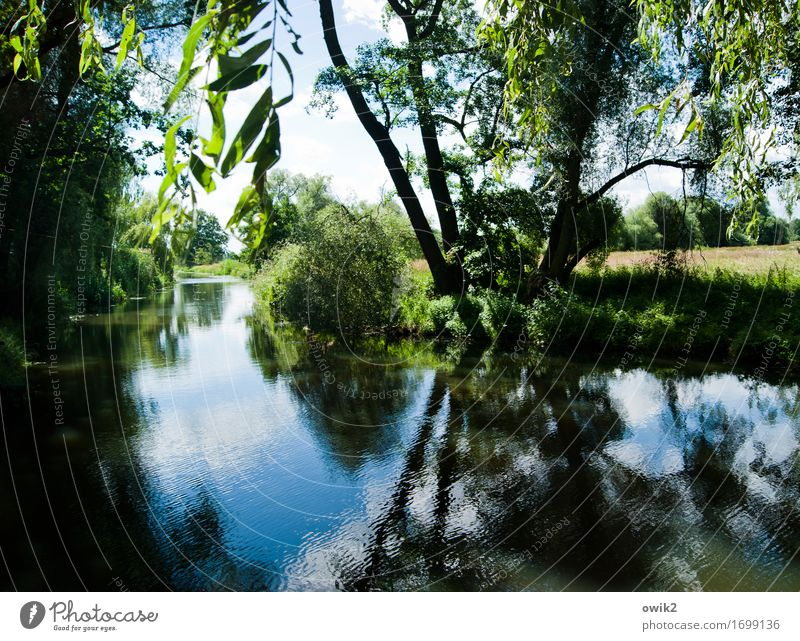 Canoe rental Environment Nature Landscape Plant Water Sky Summer Climate Beautiful weather Tree Bushes Leaf Forest River Wood Calm Idyll Spreewald Germany