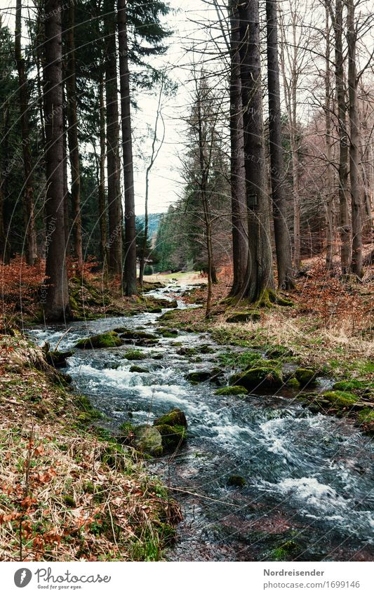 water rights Life Calm Hiking Nature Landscape Plant Water Autumn Tree Forest Brook River Sustainability Thuringia Thueringer Wald Mountain torrent