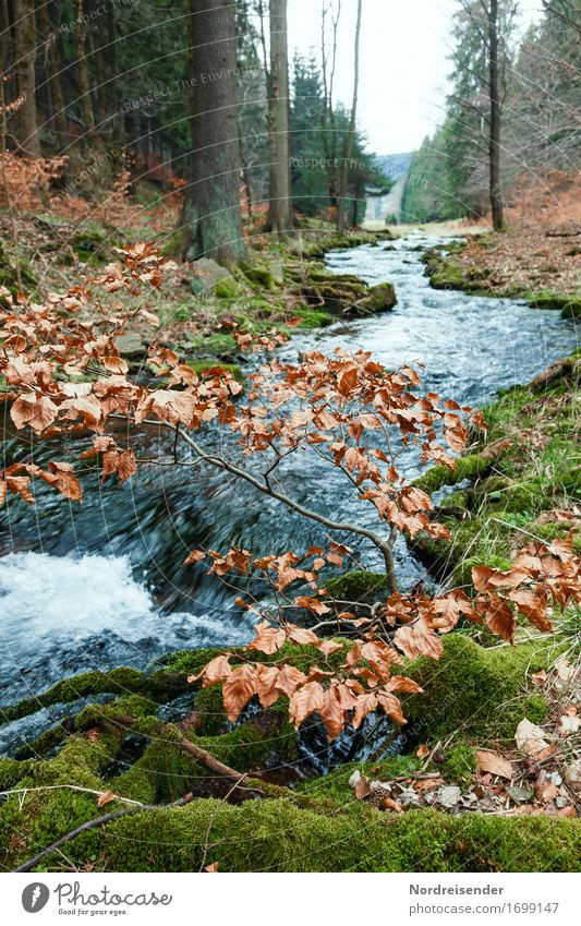 Thuringian Forest Trip Hiking Nature Landscape Elements Water Autumn Rain Tree Moss Brook River Sustainability Natural Calm Pure Mountain torrent