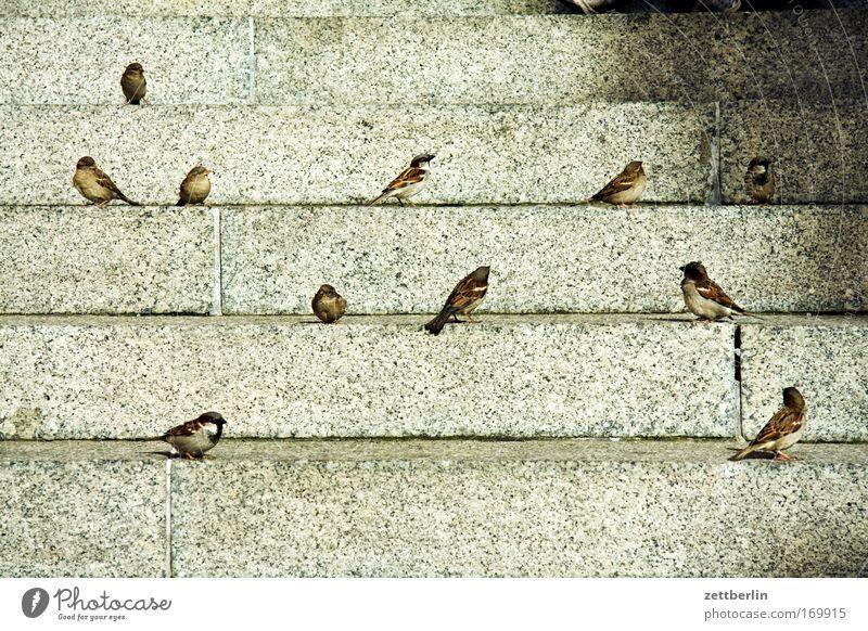 Spring Bird Stairs Sit Wait Level Sparrow Flock of birds Steps Foraging