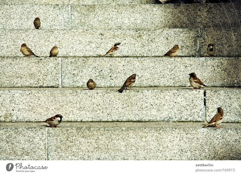 Spring Bird Stairs Sit Wait Level Sparrow Flock of birds Steps Foraging