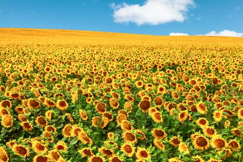 Sky Nature Plant Summer Beautiful Sun Flower Landscape Clouds Far-off places Life Horizon Field Growth Happiness Beautiful weather