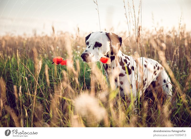 Dog Nature Plant Summer Animal Warmth Natural Field Idyll Wait Joie de vivre (Vitality) Observe Cute Friendliness Curiosity Point