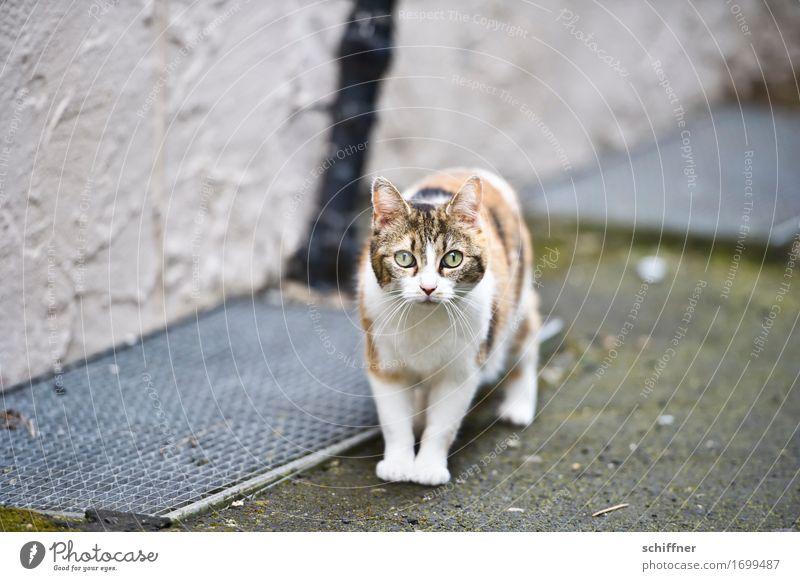 Cat Animal Observe Pet Domestic cat Scare