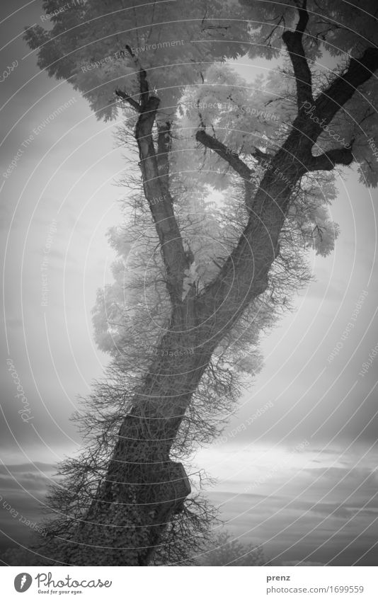 B. Environment Nature Landscape Plant Summer Tree Leaf Lakeside Dark Gray Black White Infrared Twigs and branches Black & white photo Exterior shot Experimental