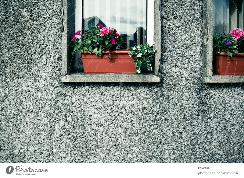 roughcast and flower boxes Colour photo Exterior shot Deserted Copy Space left Copy Space bottom Day House (Residential Structure) Detached house Facade Window