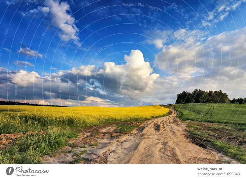 Country road in spring colza fields Summer Agriculture Forestry Industry Nature Landscape Plant Sky Clouds Sunrise Sunset Spring Beautiful weather Tree Flower