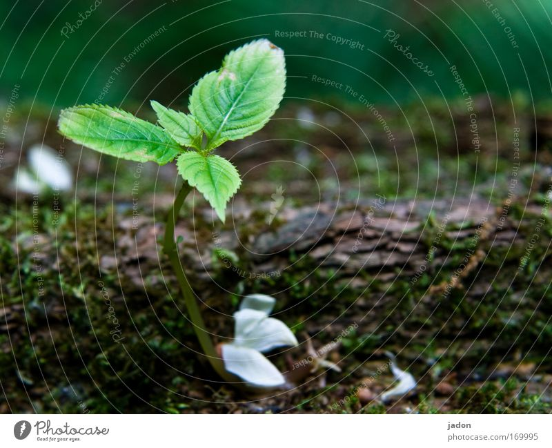 Green Tree Plant Leaf Loneliness Calm Spring Small Blossom Natural Growth Idyll Blossoming Smooth Blossom leave Survive