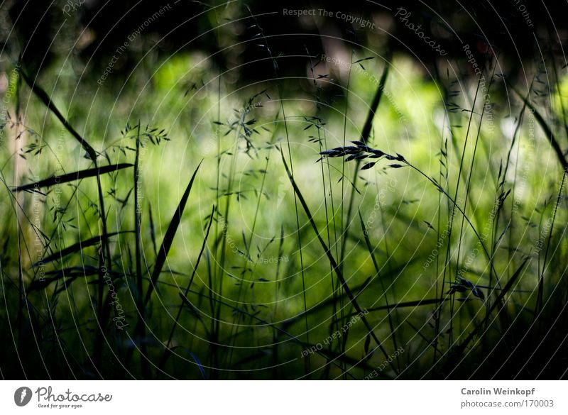 Nature Green Plant Summer Calm Black Environment Meadow Grass Spring Park Wind Field Climate Esthetic Perspective