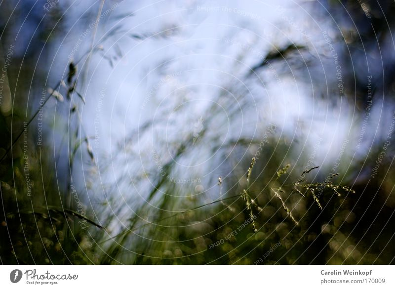 Hay fever II. Colour photo Exterior shot Close-up Detail Abstract Pattern Structures and shapes Deserted Copy Space top Light Shadow Contrast