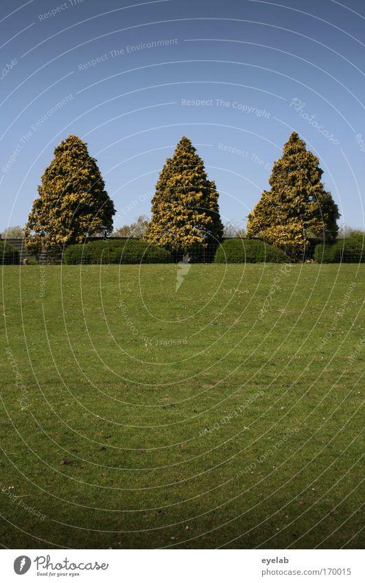 Sky Nature Green Tree Plant Summer Landscape Meadow Grass Garden Park Elegant Arrangement Esthetic Growth Bushes
