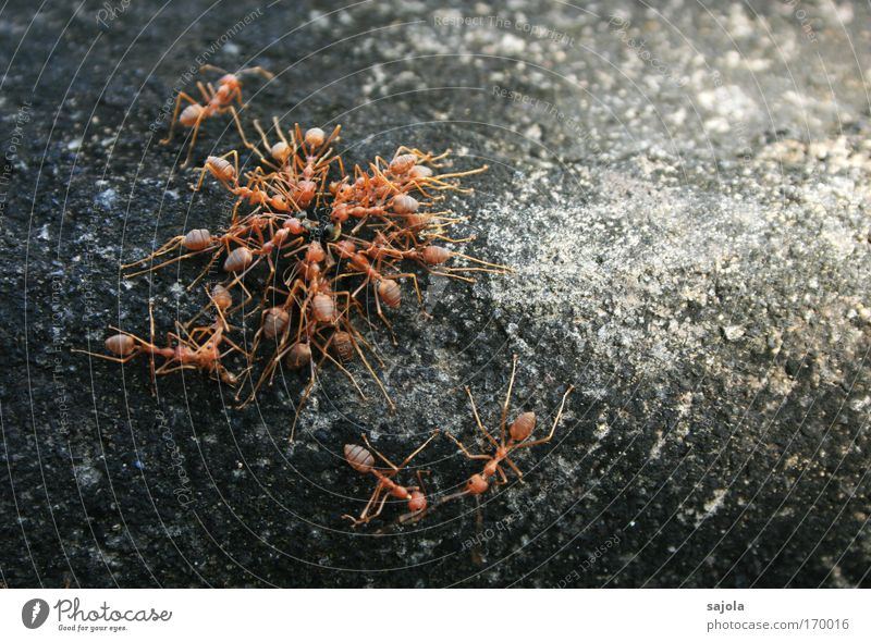 ant teamwork Colour photo Exterior shot Close-up Copy Space right Animal portrait Full-length Nature Wall (barrier) Wall (building) Insect Ant Group of animals