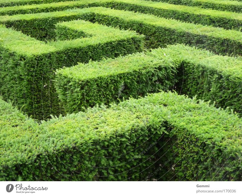 maze Tourism Trip Sightseeing Summer Maze Nature Plant Bushes Leaf Foliage plant Garden Park Hedge Tourist Attraction Think Discover Going Esthetic Green