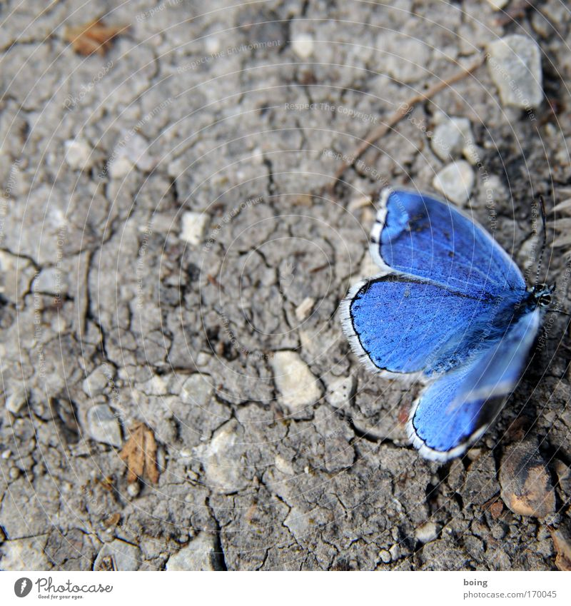 Nature Blue Animal Stone Sand Weather Environment Earth Climate Desert Protection Contact Butterfly Wild animal Dry Distress