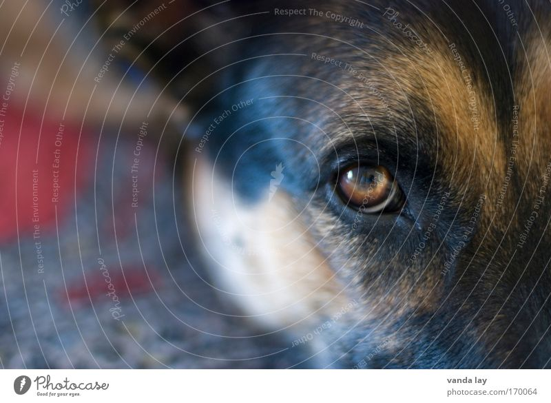 Faithful look Colour photo Multicoloured Deserted Copy Space left Blur Shallow depth of field Animal portrait Looking Looking into the camera