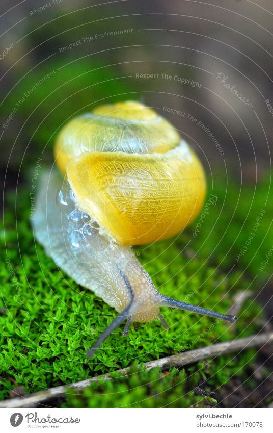Nature Green Plant Eyes Animal Yellow Small Earth Curiosity Wild animal Cute Bubble Moss Transparent Snail