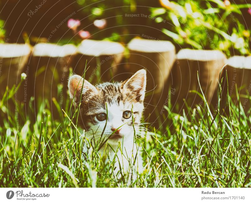 Baby Cat Playing In Grass Plant Summer Green White Animal Baby animal Environment Funny Healthy Happy Gray Brown Happiness To enjoy