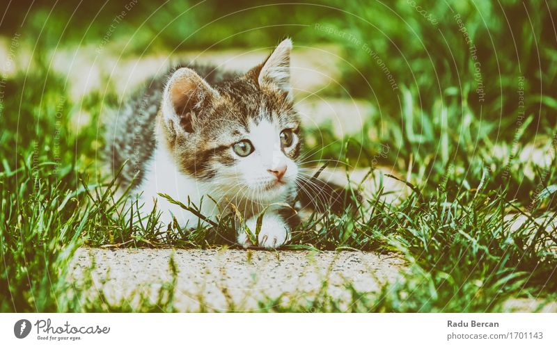 Baby Cat Playing In Grass Nature Animal Pet Animal face 1 Baby animal Observe Lie Looking Friendliness Happiness Happy Beautiful Funny Cute Wild Gray Green