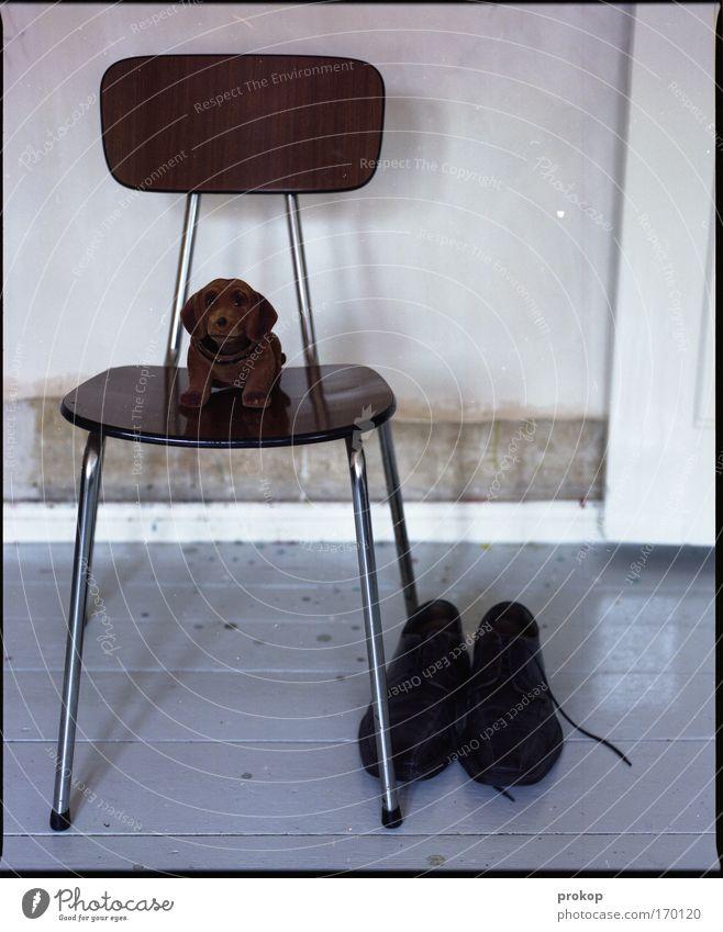 Loneliness Dog Footwear Wait Flat (apartment) Sit Safety Dangerous Gloomy Chair Clean Toys Trashy Testing & Control Pride Arrogant