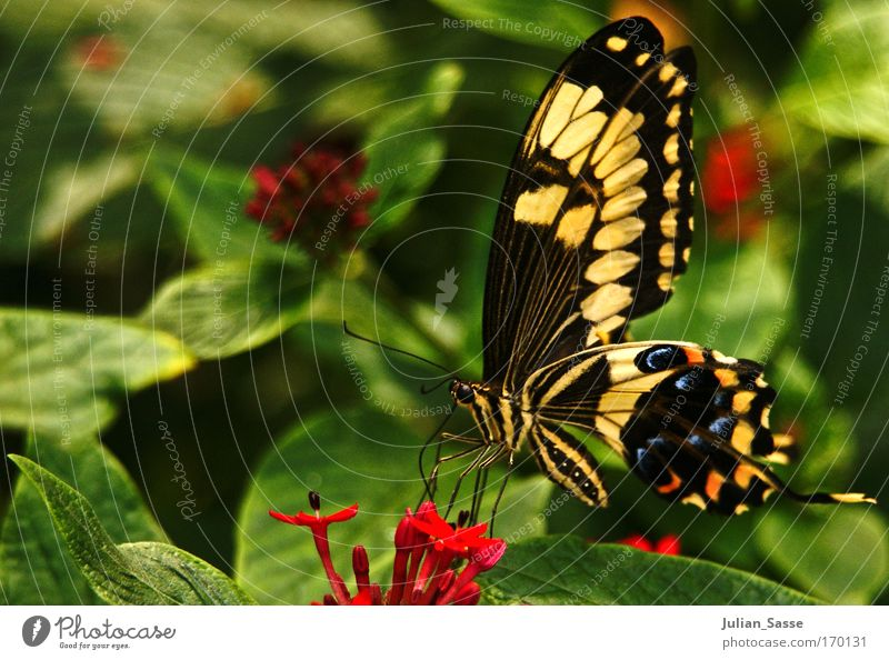 Nature Flower Animal Environment Butterfly Wild animal