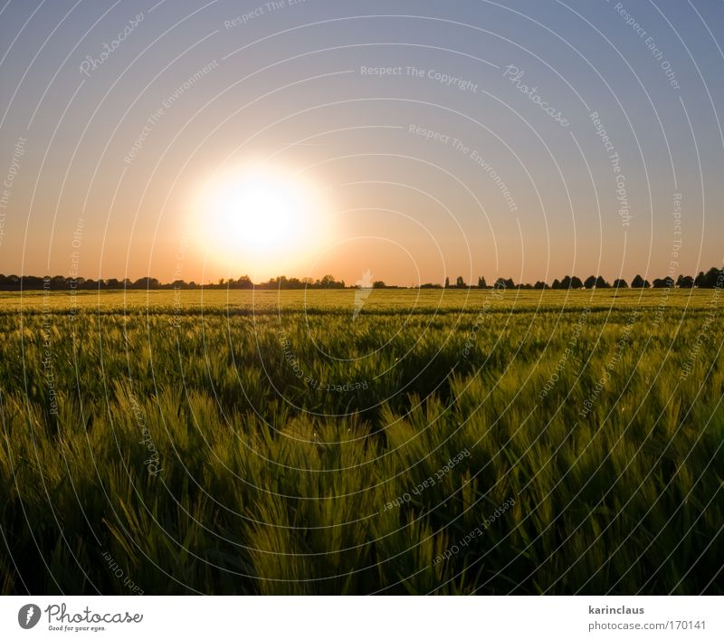 summer glow Nature Sky Sun Green Blue Plant Red Summer Yellow Meadow Grass Landscape Field Pink Environment Sunrise