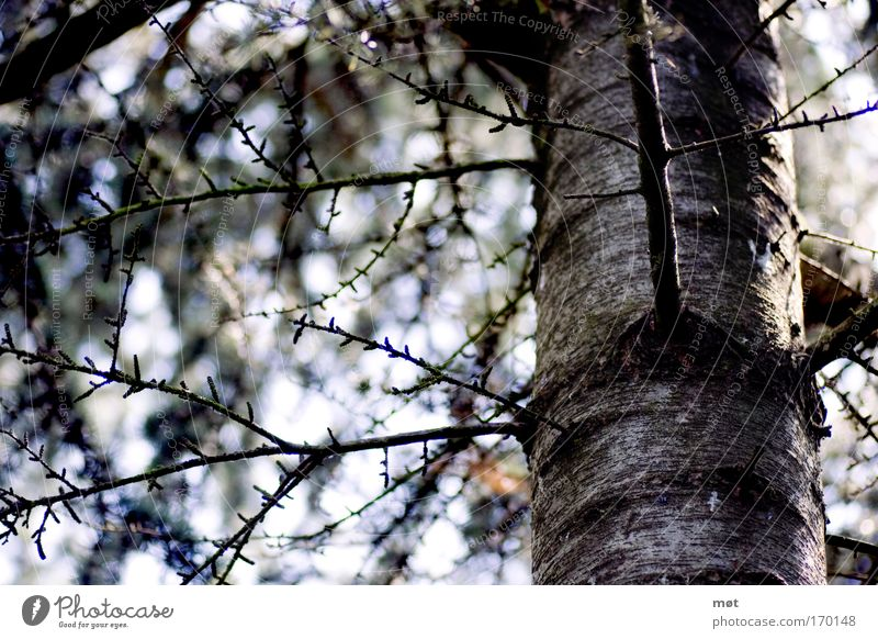 Nature Tree Blue Forest Wood Spring Environment Brown Branch Tree trunk Moss Beautiful weather Tree bark Undergrowth
