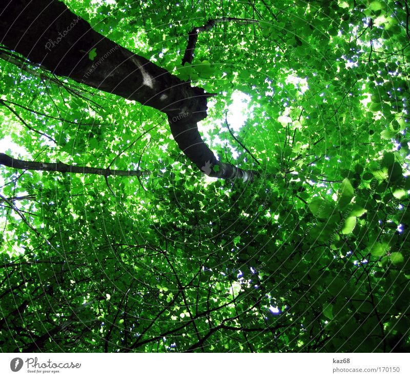 natural roof Leaf Forest Green Growth Leaf canopy Life Interlaced Tree Treetop Plant Perspective Coniferous forest Deciduous forest Glade Paradise Clearing Calm