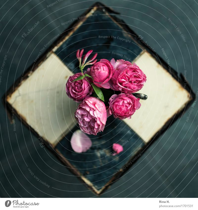 RoseStill from above II Blossom Foliage plant Blossoming Faded Transience Vintage Rust Tile Still Life Colour photo Exterior shot Deserted Copy Space left