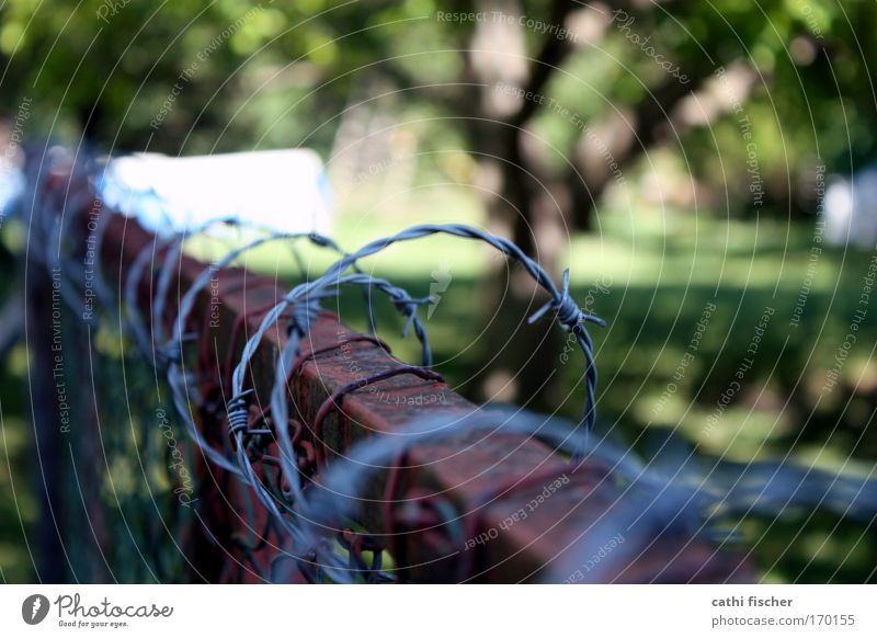 frontier Colour photo Exterior shot Day Shadow Contrast Shallow depth of field Environment Beautiful weather Tree Grass Garden Metal Rust Aggression Old Brown