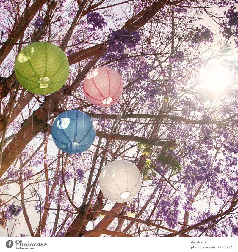 Colourful lanterns in your tree Exotic Harmonious Relaxation Summer Sun Party Feasts & Celebrations Sunlight Tree Garden Park Paper Decoration Lampion Blossom