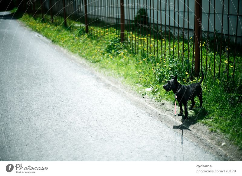 Nature Beautiful Plant Loneliness Street Life Emotions Grass Movement Freedom Dream Dog Sadness Lanes & trails Environment Rope