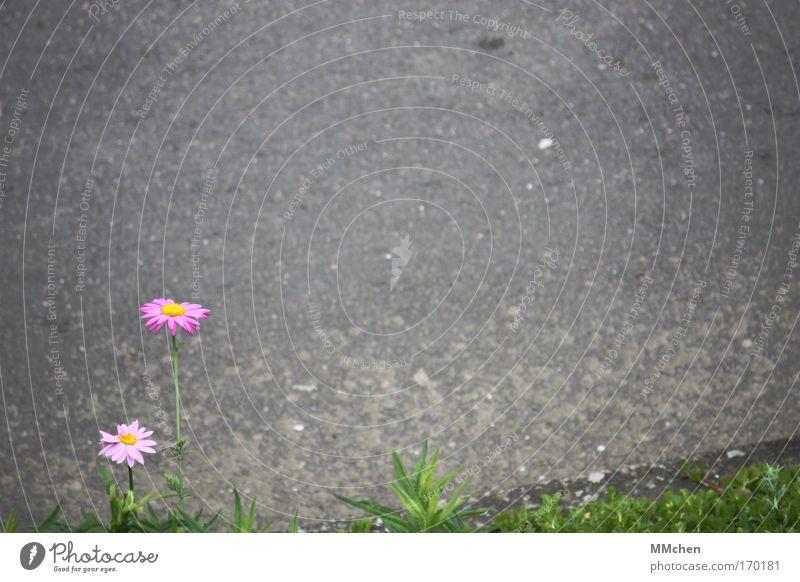 Nature Flower Plant Leaf Loneliness Street Blossom Dream Lanes & trails Power Environment Hope Asphalt Blossoming Fragrance Tar