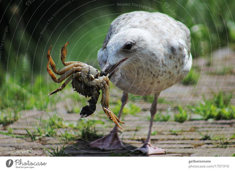 feast Breakfast Lunch Nature Animal Bird Shrimp Shellfish Seagull 2 Discover Eating Authentic Delicious Banquet Appetite Nutrition Colour photo Exterior shot