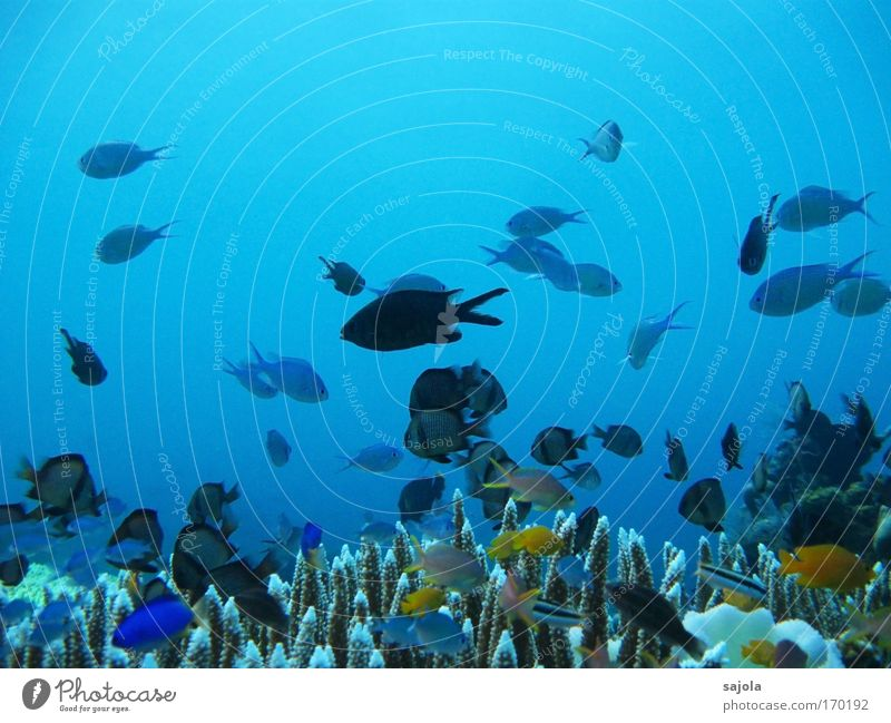 many, many colorful fishes Colour photo Multicoloured Underwater photo Copy Space top Neutral Background Animal portrait Full-length Environment Nature Elements