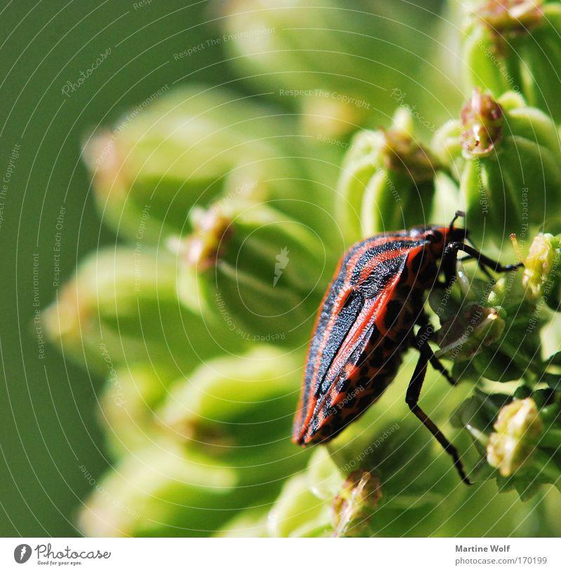 Nature Green Plant Red Flower Animal Black Natural Free Climbing Beetle Crawl Shell Bug
