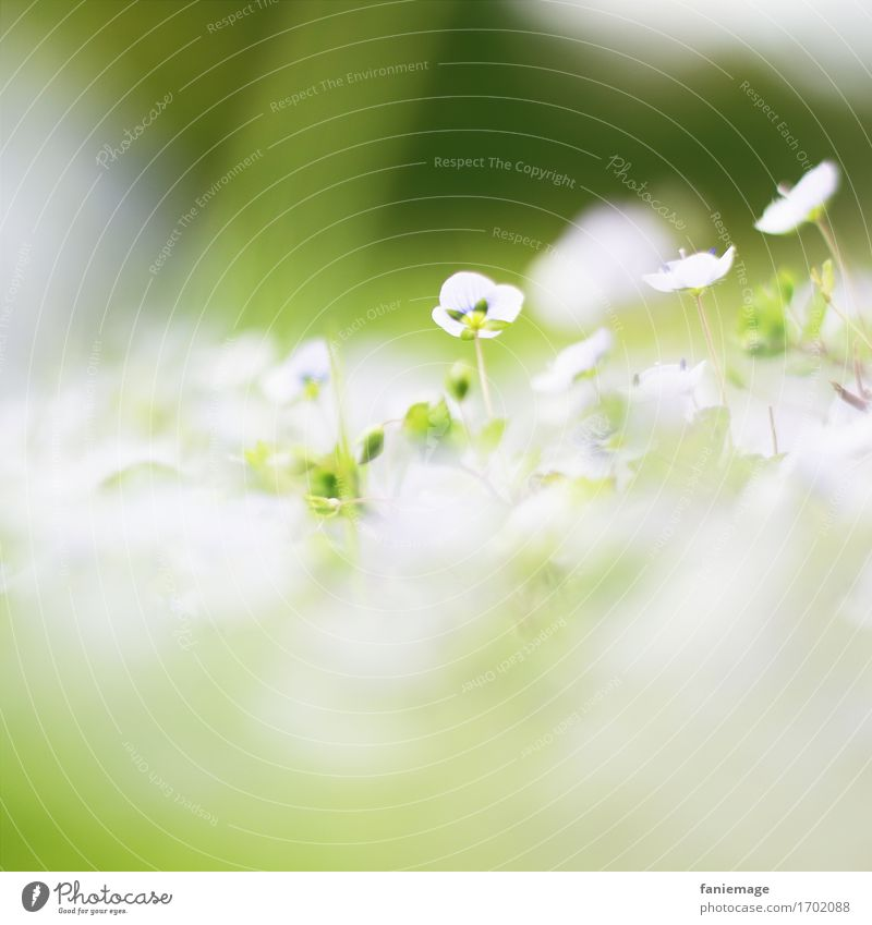 sea of blossoms Nature Plant Beautiful Flower White Spring Spring fever Spring flower Washed out Fine Green Bright green Dark green Middle Square Blossom