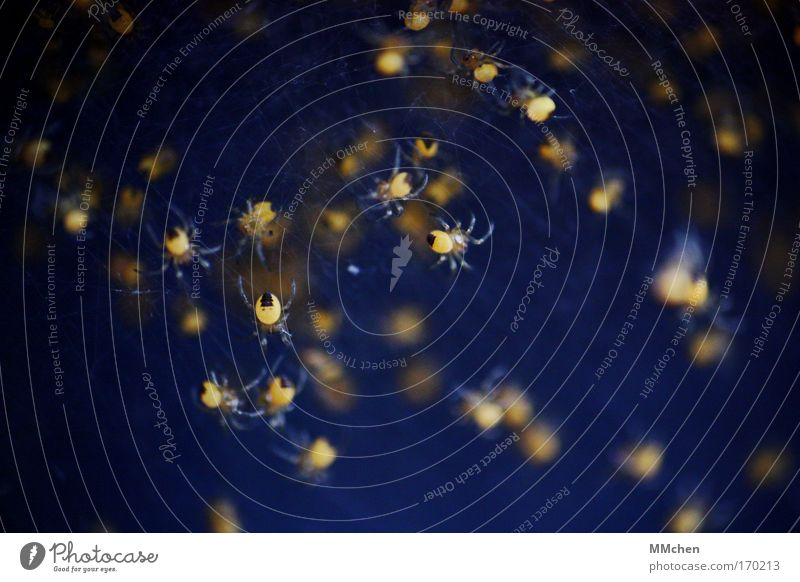 Constellation Little Spinner Colour photo Spider Group of animals Together Playing Dark Creepy Blue Yellow Fear Disgust Net Network Spider's web Spider legs