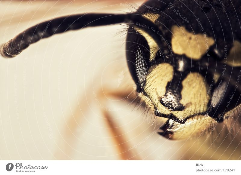 Nature Animal Yellow Environment Eyes Sadness Death Legs Flying Wing Protection Grief Animal face Insect Biology Catch