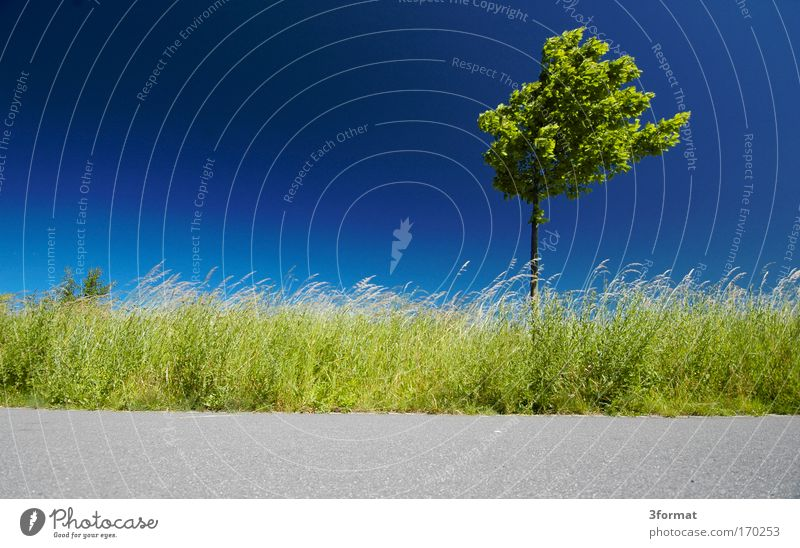 Sky Nature Plant Blue Green Summer Tree Landscape Environment Street Meadow Movement Grass Lanes & trails Gray Horizon