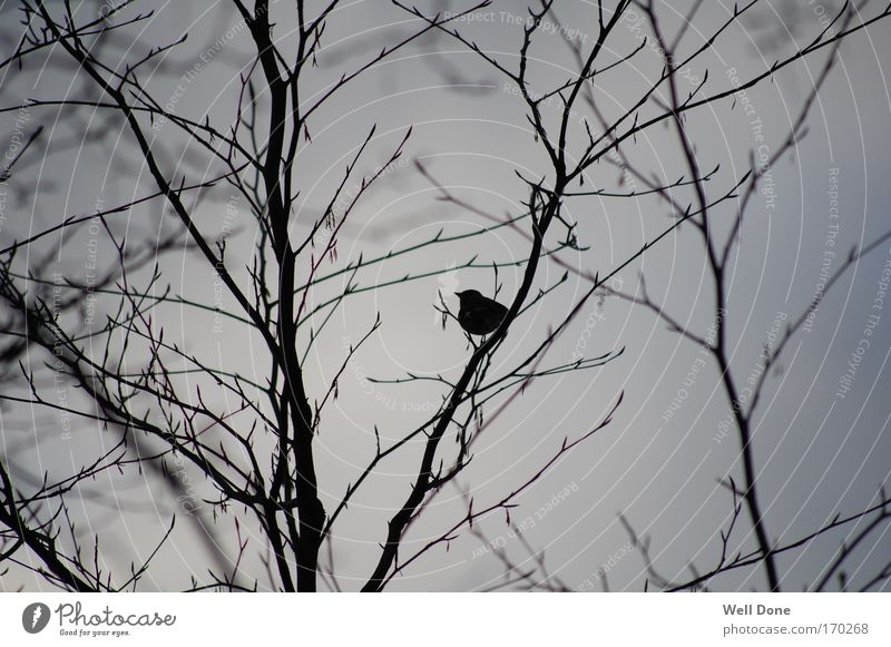 Nature Tree Winter Animal Cold Bird Serene Branchage Bad weather