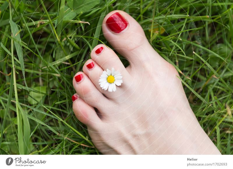 Flower_and_foot-1 Lifestyle Joy Happy Personal hygiene Skin Pedicure Healthy Harmonious Well-being Contentment Relaxation Summer Garden Feminine Young woman