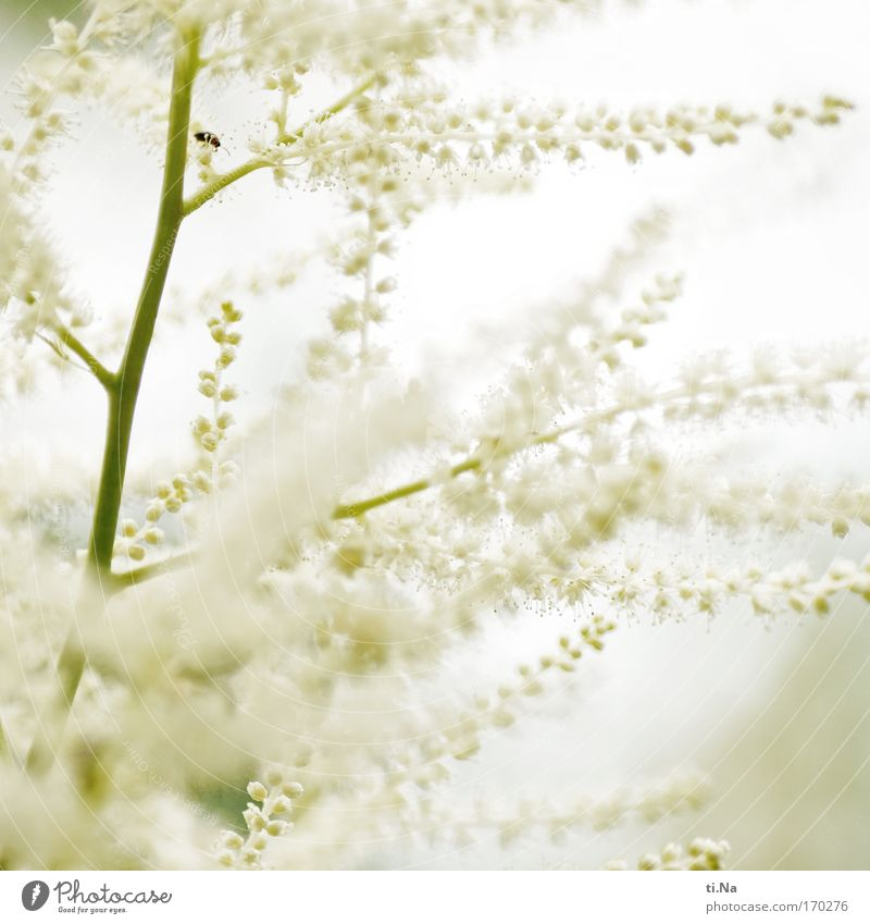 Flower magic in white Environment Nature Plant Animal Spring Summer Bushes Blossom Beetle Blossoming Fragrance Growth Esthetic Authentic Beautiful Green White
