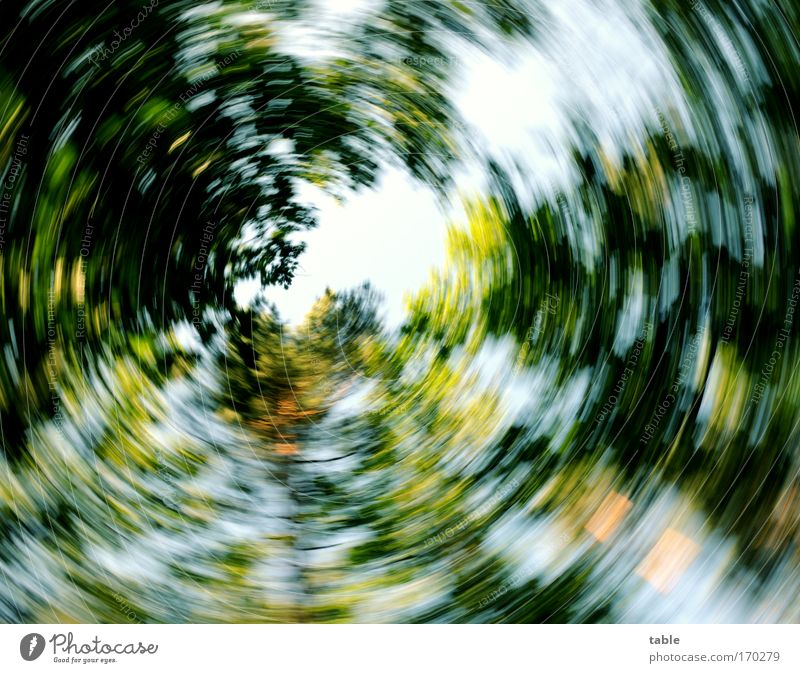 everything is spinning... Colour photo Sunlight Blur Motion blur Worm's-eye view Wide angle Joy Happy Contentment Relaxation Nature Plant Sky Climate Tree