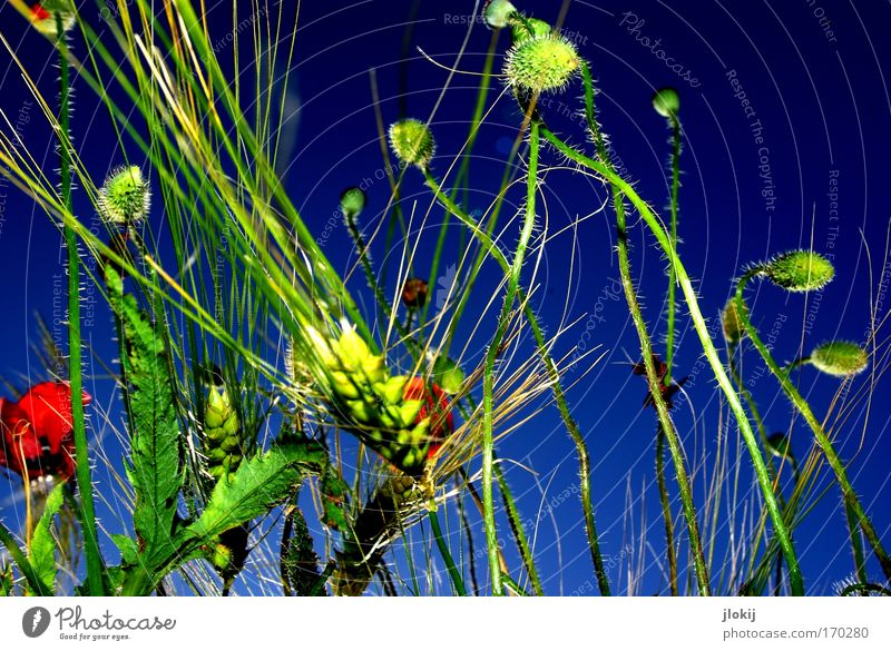 field study Colour photo Multicoloured Exterior shot Day Contrast Nature Plant Sky Cloudless sky Summer Foliage plant Agricultural crop Field Touch Movement