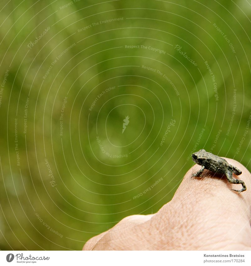 Nature Hand Green Far-off places Animal Freedom Jump Small Bright Lake Baby animal Skin Wait Beginning Fingers