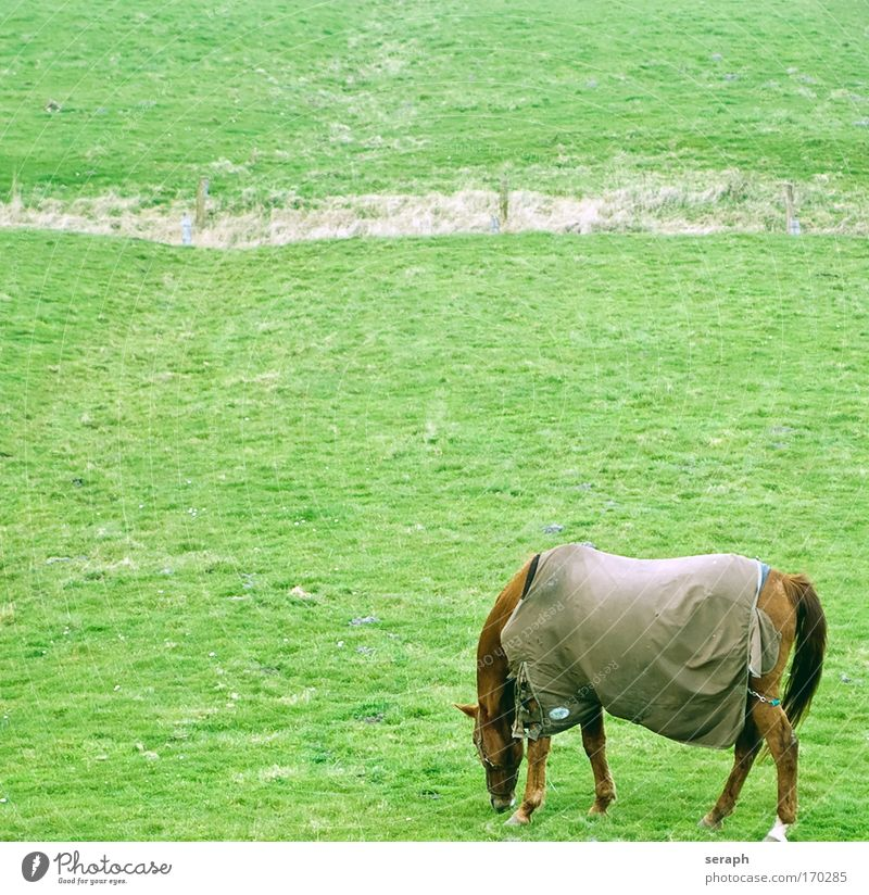 Grazing idyllic landscape Horse Ruminant Idyll Blanket rural grassland Grass meadow pastureland Nature Landscape Verdant Agriculture flora To feed Field grazing