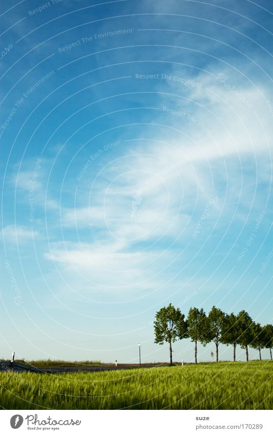 7 in one fell swoop Environment Nature Landscape Plant Elements Air Sky Climate Climate change Beautiful weather Tree Grass Agricultural crop Grain Park Meadow