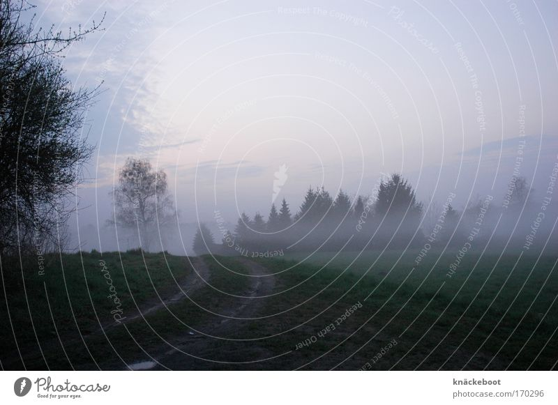 Nature Forest Lanes & trails Landscape Moody Field Fog Weather