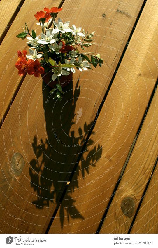White Plant Red Sun Flower Summer Wood Garden Blossom Spring Table Transience Bouquet Vase Invitation Donate